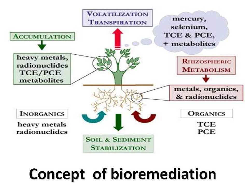 Concept-Of-Bioremediation