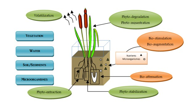 Roles of Microorganisms and plants to mitigate pollutants